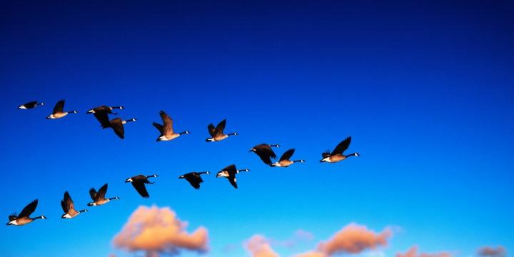 Миграция фотографий или ещё одна очередь на MySQL